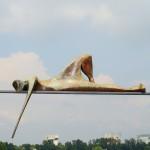 2008 - Nieuwsgierig - 61 cm lang.